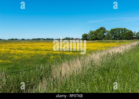 Meadows behind the Eider dyke on a beautiful summer day, Eider-Treene-Sorge-Niederung or lowlands, Kleve, Dithmarschen, Schleswig-Holstein, Germany - Stock Image