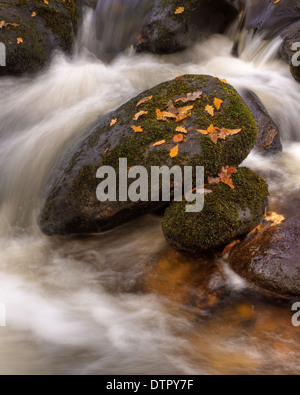 Whitewater rapids in the autumn on the River Aune - Dartmoor National PArk - Stock Image