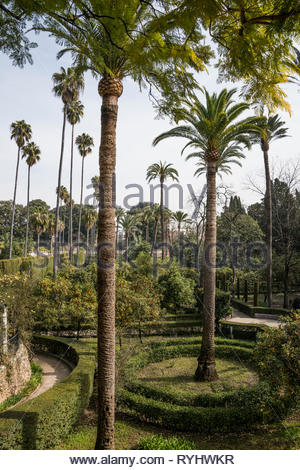 Tall palm trees in the gardens at the Royal Alcázar of Seville - Stock Image
