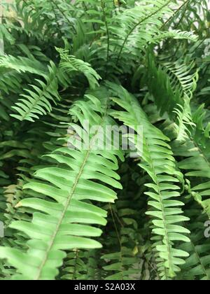 Up close of fern leaf - Stock Image