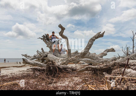 Woman and Man posing on some Driftwood located on Driftwood Beach Jekyll Island Brunswick, Georgia USA - Stock Image