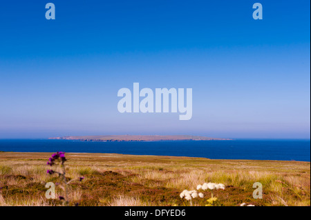 Small Scottish island off north coast of Scotland with flowers in foreground - Stock Image