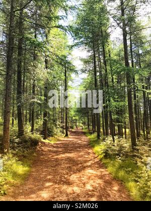 Sunshine on a wooded trail. - Stock Image