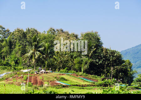Vegetables growing in village allotments in countryside near Luang Prabang, Louangphabang province, Laos, Asia - Stock Image