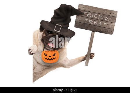 Halloween pug puppy dog holding up wooden sign with text trick or treat, wearing witch hat and pumpkin basket, isolated - Stock Image