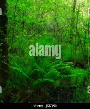 Swampy Area near The Sinks, Great Smoky Mountains National Park - Stock Image