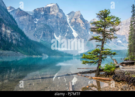 Tree on Moraine Lake, Banff, Alberta, Canada - Stock Image