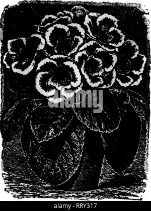 """. Florists' review [microform]. Floriculture. ?T. i-T - '. »""""T-,. r 'V:' V I Fbbbuabt 1, 1912. The Weekly Florists' Review. 67 DREER*S TUBEROUS-ROOTED Begonias and Gloxinias There is a scarcity of really first-class bulbs of Begonias this season, due to the unprecedented drought throughout Europe during the past summer, but the Specialist who has grown this stock for us for more than twenty years, having facilities f6r watering, has been able to supply us with bulbs almost as large as in norma seasons, while in quality they are fully up to our usual standard. Th«re ka« be«n no ad vane* in - Stock Image"""
