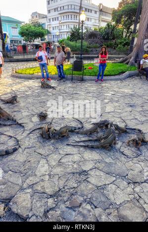 Seminario Park, also known as Iguana Park, Guayaguil Ecuador - Stock Image