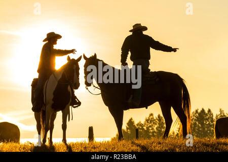 Cowboys on horses, sunrise, British Colombia, Canada - Stock Image