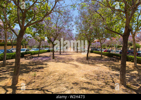 Xabia Spain street view of beautiful trees and blossom in the historic Spanish Costa Blanca town in summer also known as Javea - Stock Image