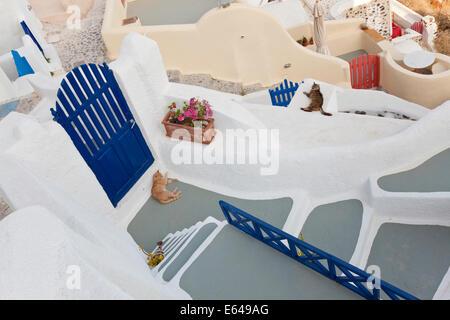 Cats, Oia, Santorini, Cyclades islands, Greece - Stock Image