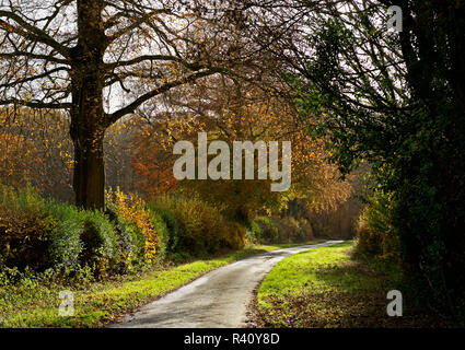 Country lane in autumn, Bramdean, Hampshire, England UK - Stock Image