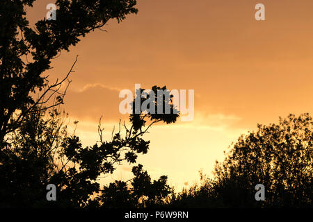Beautiful autumn sunset with silhouetted trees. - Stock Image
