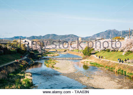 Takano river with cherry blossoms at spring in Kyoto, Japan - Stock Image