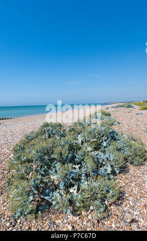 Beach vegetation on a beach by the sea in Summer in England, UK. Portrait vertical with copy space. - Stock Image