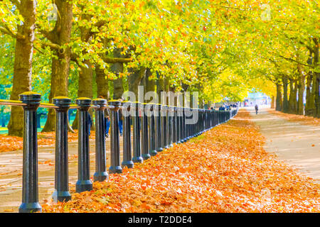Autumn scene, constitution hill road lined with trees in Green Park, London - Stock Image