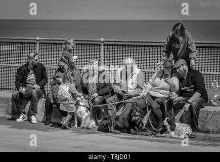 Social Media - large family group using mobile phones - Stock Image