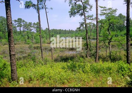 Swamp at Bayou Castelle in Mississippi Sandhill Crane National Wildlife Refuge, Gautier, Mississippi, AGPix_0635 - Stock Image