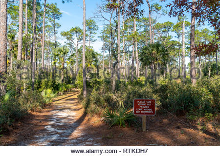 Trail at Faver-Dykes State Park near St Augustine, Florida USA - Stock Image