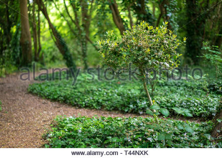 Path through a quiet forest in a London park. - Stock Image