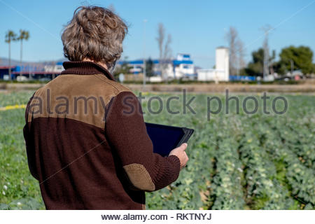 Rear view of a farmer with a tablet watching his crops - Stock Image