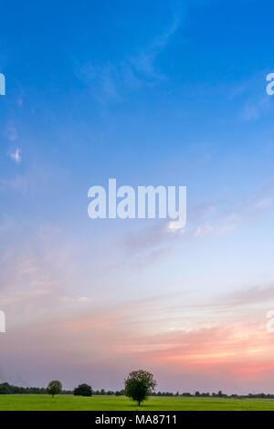 Photo of meadow and blue sky with isolated tree, Place Thol, State Gujarat, India - Stock Image