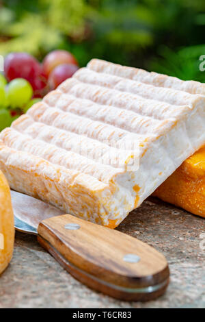 French cheeses collection, yellow Vieux Pane cheese with white mold served on marble plate outdoor in green garden close up - Stock Image