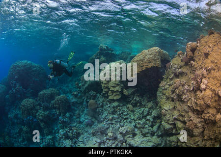 Female scuba diver explores blue lagoon relfecting colors of the coral in the Red Sea. - Stock Image