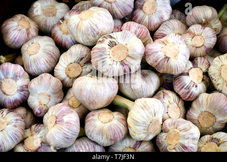 Fresh garlic at a vegetable and fruit market stall on a farmers market in France - Stock Image