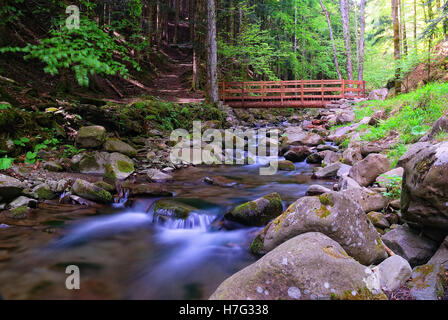 wooden bridge in the natural park in autumn - Stock Image
