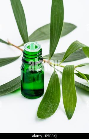 Essential oil of Melaleuca quinquenervia . - Stock Image