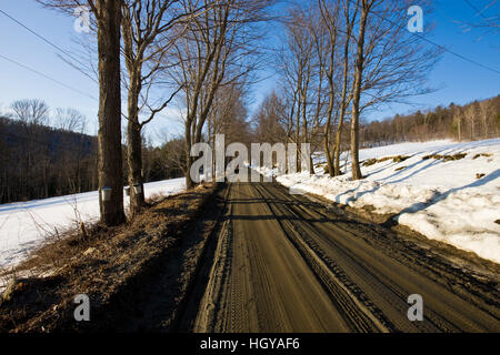 Sap buckets on maple trees on a dirt road in Pomfret, Vermont. - Stock Image