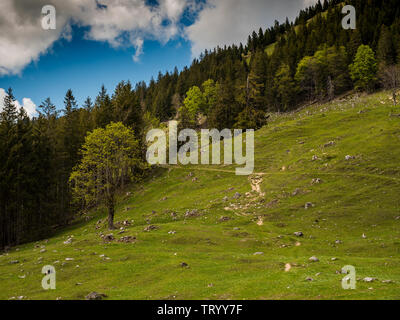 Trail to Mount Wendelstein in Upper Bavaria in the late Spring, featuring green gras, rocks and partly cloudy blue sky - Stock Image