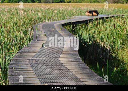 Raised path through the wetlands at 'Kongens Kær' near Vejle, Denmark - Stock Image