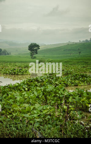 River of water hyacinths and hills landscape - Stock Image