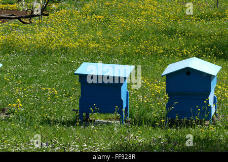 Spring garden with beehives. - Stock Image