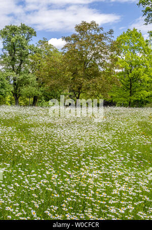 Wildflowers on a meadow in the Hoehenried Park, Bavaria, Germany - Stock Image