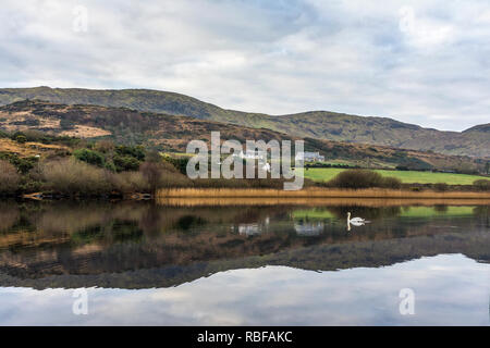 Ardara, County Donegal, Ireland. 10th January 2019. A swan glides over a still Lake Shanaghan reflecting nearby hills on a calm morning. Credit: Richard Wayman/Alamy Live News - Stock Image
