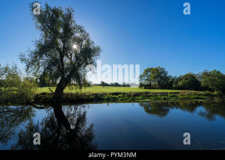 Autumn sun through tree reflected in water - Stock Image