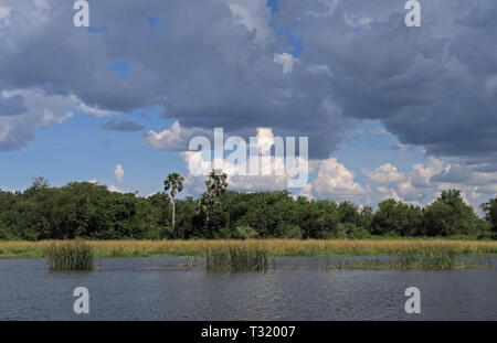 clouds over forested riverside  Murchison Falls National Park, Uganda                      November - Stock Image