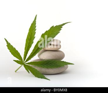 marijuana leaf leaning on a pile of stones isolated on white - Stock Image
