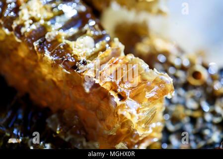 Closeup macro image of fresh organic natural honey oozing from a golden honeycomb - Stock Image