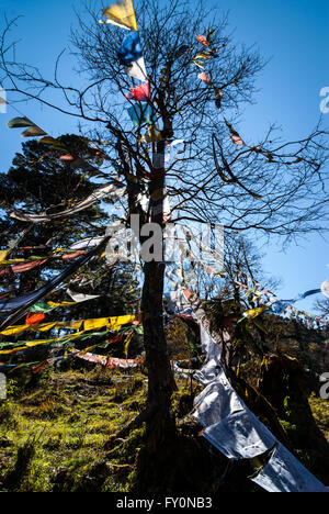 Colourful prayer flags wrapped around a tree at Dochu La, a 3140m pass on the road between Thimphu and Punakha in - Stock Image