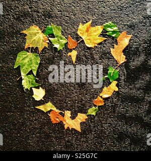 Love heart made of leaves on a water wall - Stock Image