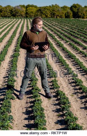 A farmer with a tablet supervises his crops - Stock Image