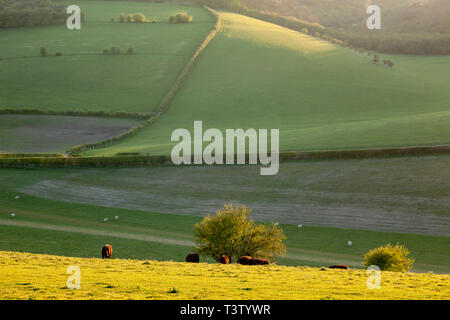 Sunset on the South Downs in West Sussex, England. - Stock Image