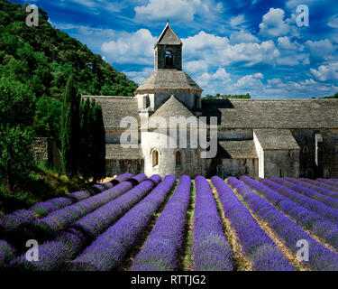 FR - VAUCLUSE: Abbaye Notre Dame de Senanque near Gordes - Stock Image
