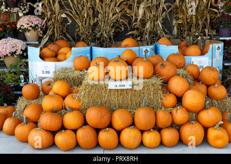 Pumpkins for sale outside a supermarket in Vancouver, BC, Canada - Stock Image