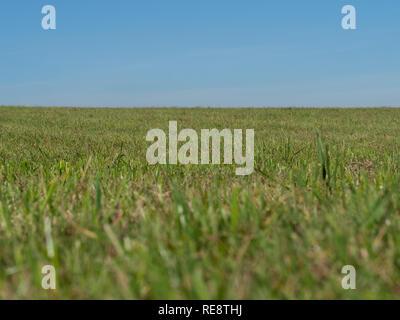 Grassland and sky - Stock Image